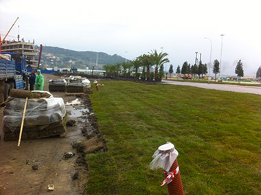 Ландшафтное проектирование Олимпийского парка
